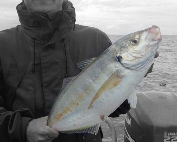 beautifull-trevally-fishing-charters-whitianga-nz