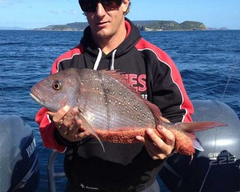 more-snapper-fishing-charters-whitianga-nz
