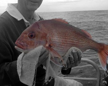 nice-snapper-fishing-charters-whitianga-nz