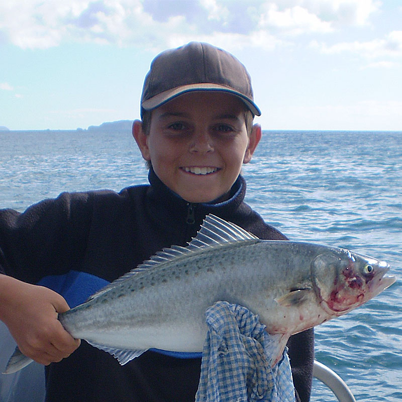 how to catch hapuka in nz